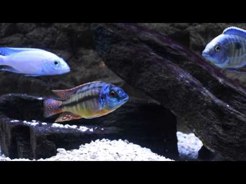 Wonder Of Cichlids Unboxing - HOLY CARP! You Have To See This