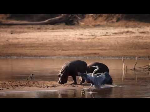 The Mobile Walking Safaris, Zambia, South Luangwa Robin Pope