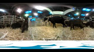 SIA 2016 [VIDEO 360] : En immersion dans l'enclos des chèvres