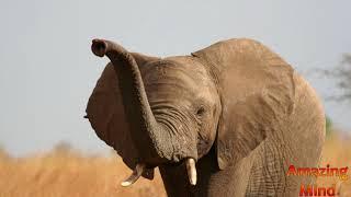 ДА! Действительно ОНИ РАЗНЫЕ! Слон - Индийский и Африканский