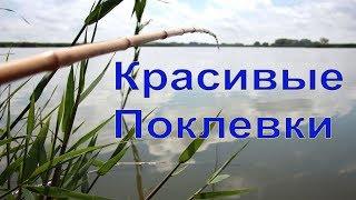 КРАСИВЫЕ ПОКЛЕВКИ-3. Рыбалка, Поплавочная удочка, Ловля на поплавок. Fishing, ikan, câu cá