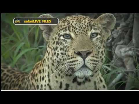 Wild Africa Nat geo tv show drive sunset 15-12 Karula&Tingana mating what a drive