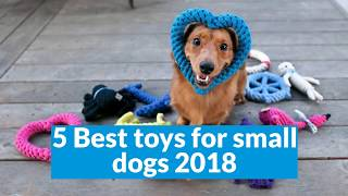 Top 5 best toys for small dogs 2018