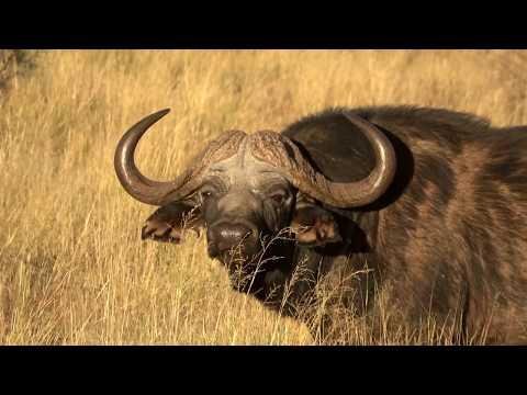 2017 Namibia & The Kalahari Safari
