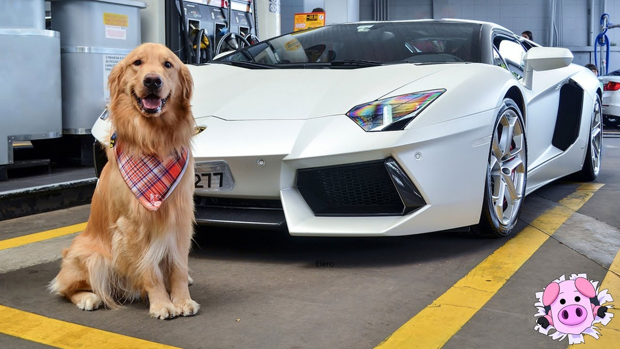 10 RICHEST PETS That Live Better Lives Than You
