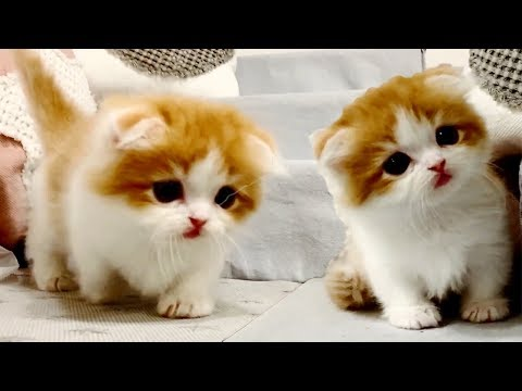 4K HDR Video -  Most Adorable Pets Of All Time – Funny Kittens  And Puppies Playing