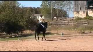 """Detaila Sweet Escape is a 6 year old mare by """"The Only Escape"""". She..."""