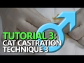 TUTORIAL 3: Male Cat Castration - Using a pedicle knot