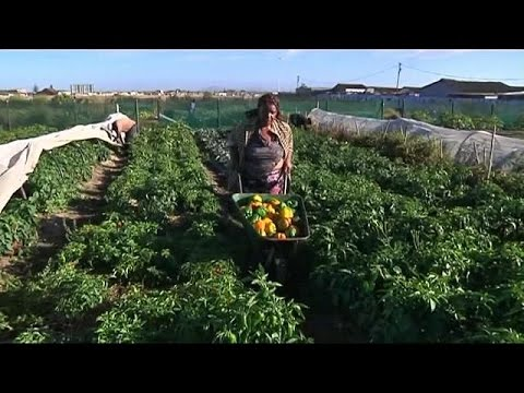 Women in South Africa's Cape Town townships turn to micro farming