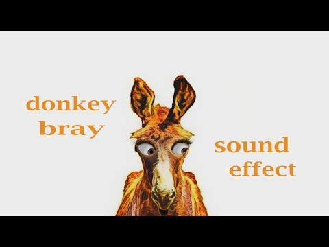 How A Donkey Bray - Sound Effect - Animation