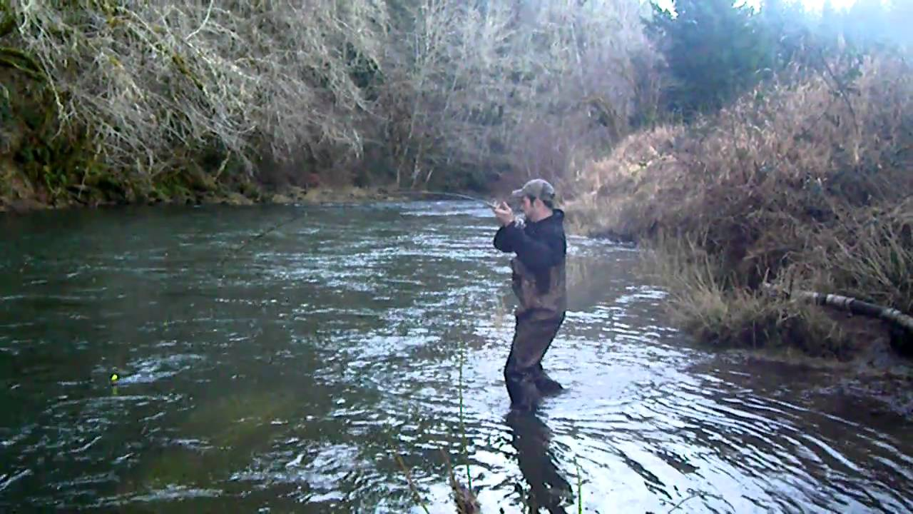 nice fish winter steelhead alsea river or youtube