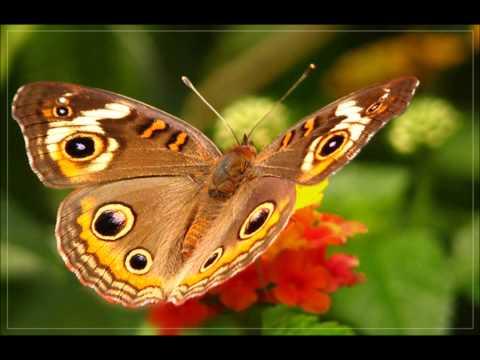 самые красивые бабочки планеты