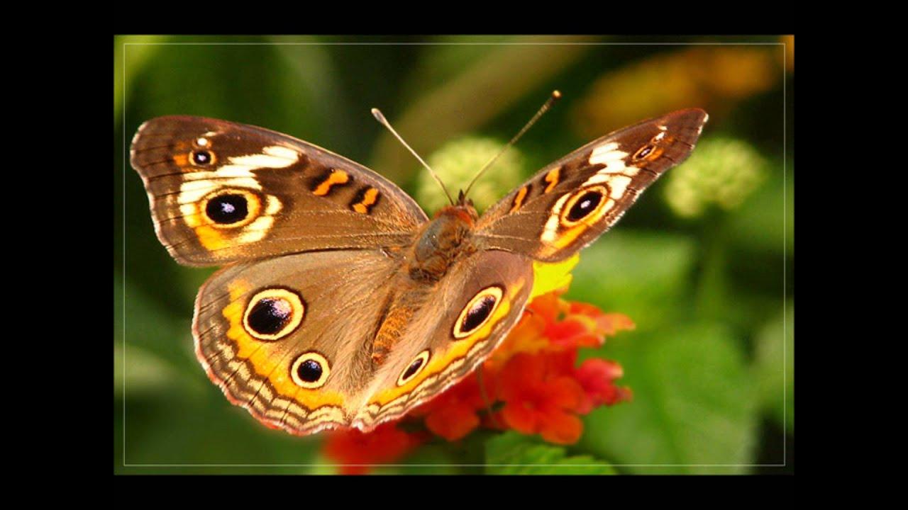 самые красивые бабочки планеты - YouTube