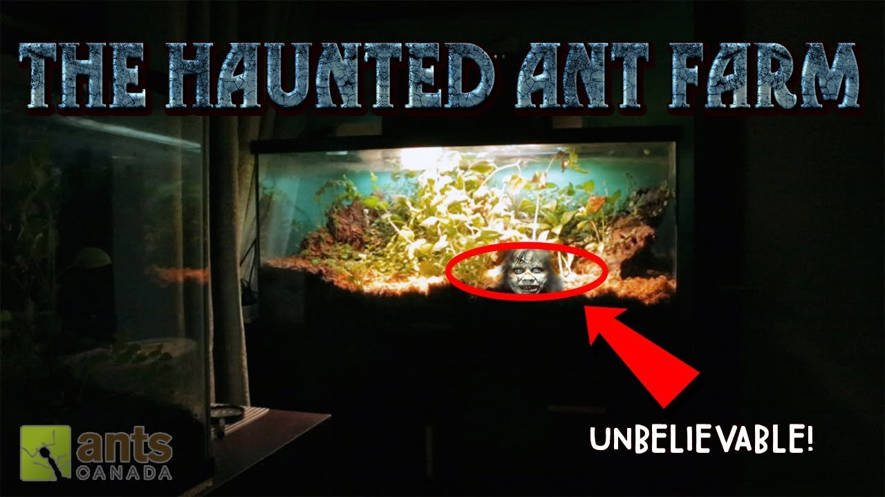 the-haunted-ant-farm-halloween-special