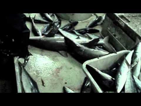 Destructive Fishing Exposed