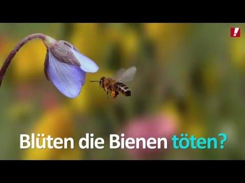 Keine Erlaubnis für Bienenkiller!