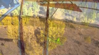 Dragonfly Autumn