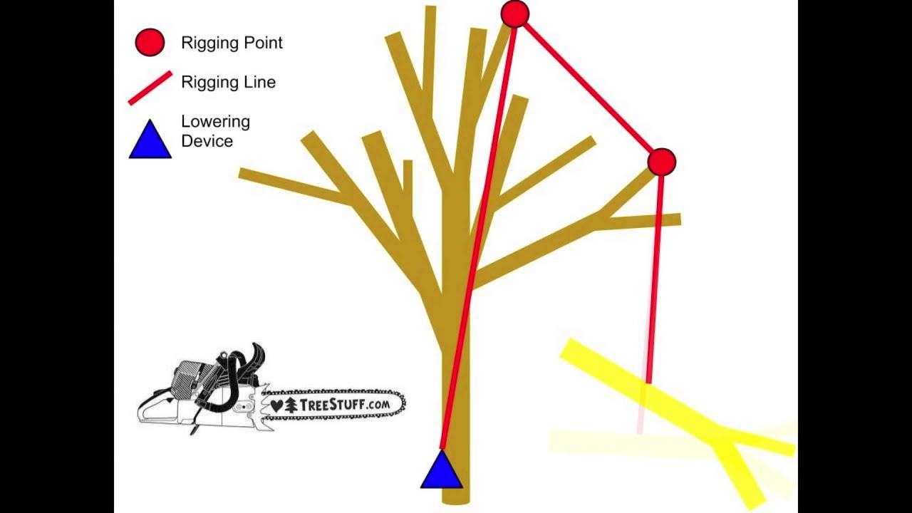 Graphic Tree Diagram Tree Rigging Angles And Redirects Treestuff Com Tech