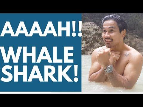 Whale Shark in CEBU, Philippines VLOG 43