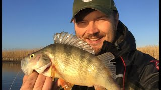 Рыбалка на Маныче Бешенный клев окуня Лодка Girgis390 в деле