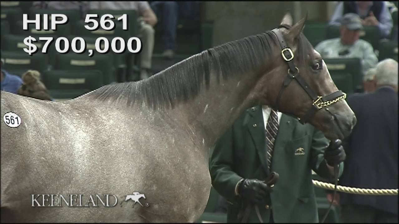Tapit Ponche De Leona Hip 561 At Keeneland September