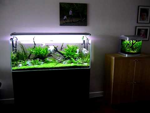 Nature Aquariums 240 Litre And 25 Litre Youtube