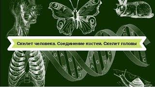 Биология 8 класс $8 Скелет человека. Соединение костей. Скелет головы