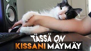 Miun kissani  ❤ MÄYMÄY THE CAT ❤