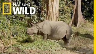 Protecting Rhinos in Kaziranga National Park   Nat Geo WILD