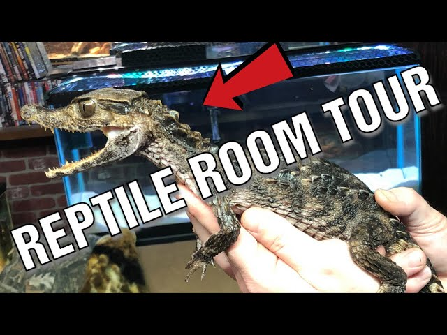 REPTILE ROOM TOUR AT THE CHAMBERS !