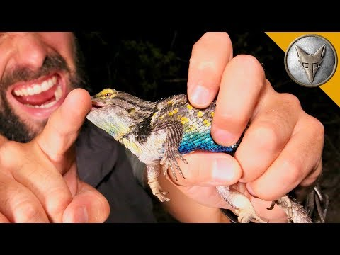 Spiny Lizard Catches Me!