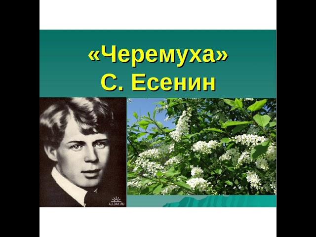 Изображение предпросмотра прочтения – КамилаИзудинова читает произведение «Черёмуха» С.А.Есенина