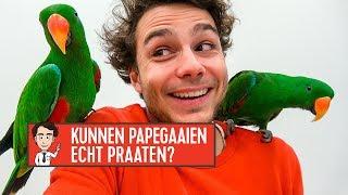 kunnen papegaaien echt praten? joost mag het weten