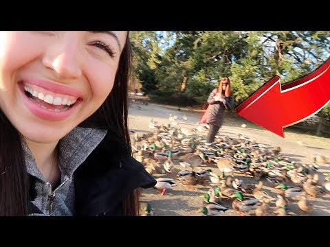 Look at all those chickens!!