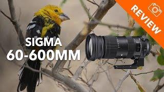 Sigma 60-600mm f/4.5-6.3 Review - Kamera Express