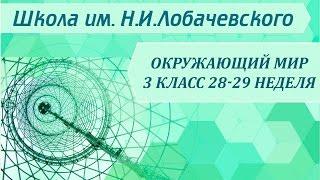 Окружающий мир 3 класс 28-29 неделя Выделительная система