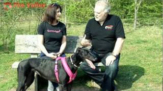 Spotlight Shropshire: Canine Angel Thumbnail