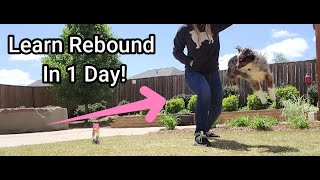 How to: Teaching Rebound Dog Trick in 1 Day!
