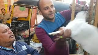 سوق الحمام من المحله الكبري،،الصحبه الحلوه ،،ج٢ Egyptian pigeon's market 2018