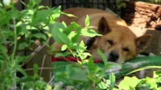 愛犬のブッチがなくなって2年がたちました。 好きな曲に、花と愛犬の画...