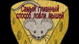 Мышеловка своими руками. Дедовский способ ловли мышей. Очень простое но безотказное изобретение.