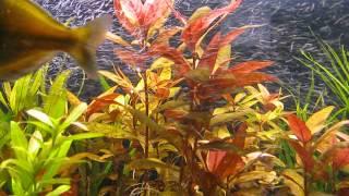 голландский аквариум в доме природы Киев