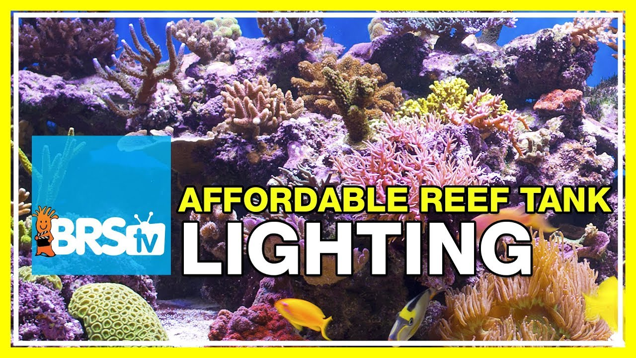 faq 37 what s the most affordable lighting system for a reef tank