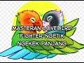 Masteran Lovebird Fighter Ngetik Ngekek Panjang  Mp3 - Mp4 Download
