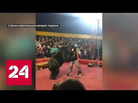 В Карелии цирк исчез после нападения медведя на дрессировщика - Россия 24