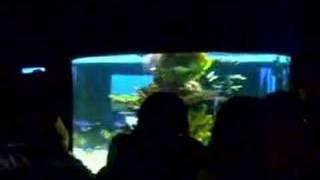 Manila Ocean Park (aquariums)