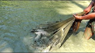 Cast Net Fishing | Catching Lot Of Fish using Cast net by Removing ...