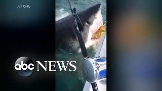 fisherman off the coast of manasquan new jersey captured a great white shark video