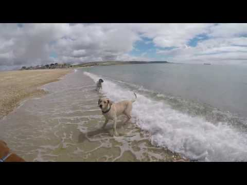 Purdy, Fly & Trigger Bowleaze Cove July 2016