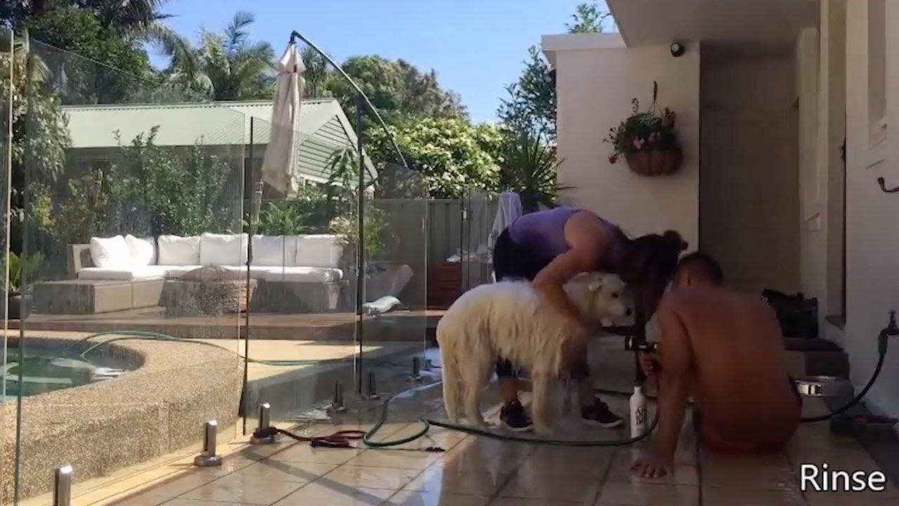 Pet Valu Free Dog Wash